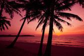Palmiers silhouette sur le coucher du soleil plage tropicale. coucher de soleil tropical — Photo