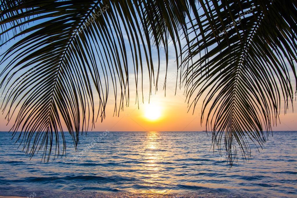 tropical sunset palm tree - photo #19