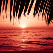 Palm trees silhouette on sunset tropical beach. Tropical sunset — Stok fotoğraf