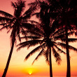 Palm trees silhouette on sunset tropical beach. Tropical sunset — Stock Photo