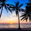 Beautiful tropical sunset with palm trees. Tropical beach. palm — Stock Photo