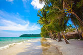 Beautiful beach and tropical sea. Palm and tropical beach — Stock Photo