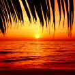 Palm trees silhouette on sunset — Stockfoto