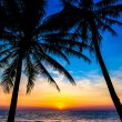 Tropical sunset with palm trees — Stock fotografie #38314035