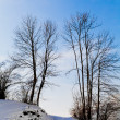 mooie winterlandschap — Stockfoto