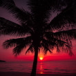 Palm trees silhouette on sunset tropical beach. Tropical sunset — Φωτογραφία Αρχείου #38748845