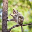 Monkey — Stock Photo #38749549