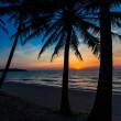 Nice sunset. Tropical sunset, palm trees — Stock Photo