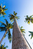 Nice palm trees in the blue sunny sky. Three palm trees against — Stock Photo
