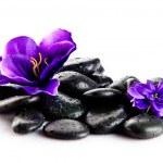Zen pebbles. Stone spa — Stock Photo