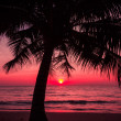 Tropical sunset — Stock fotografie #39682565