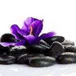 Zen pebbles — Stock Photo #39733845