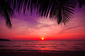 Tropical sunset — Foto de Stock