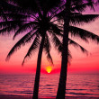 Tropical sunset — Stock Photo #39832111