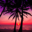 Palm trees silhouette on sunset tropical beach. Tropical sunset — Stockfoto