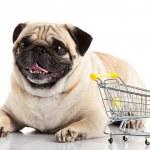 Pug dog with shopping cart isolated on white. — Stock Photo #40320585