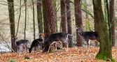 Deer family — Stock Photo
