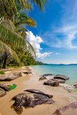 Beautiful beach and tropical sea — Stock Photo
