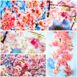 Beautiful Cherry blossom , pink sakura flower — Stock Photo #41535687
