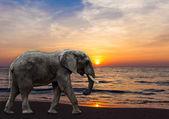 Zonsondergang op het strand. olifant op het strand — Stockfoto