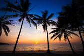 Sunset at tropical beach — Foto Stock