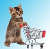 Cat with shopping cart — Stock Photo