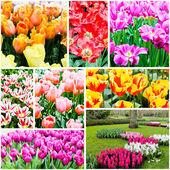 Beautiful spring flowers.  — Stock Photo