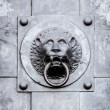 Lion door knob — Stock Photo