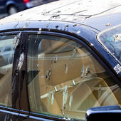 Bird droppings on car — 图库照片