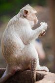 Mono comiendo plátano — Foto de Stock