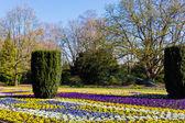 Flores no jardim — Fotografia Stock