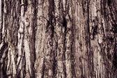 Texture Of Wood. bark of tree texture  — Stock Photo