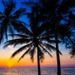 Beautiful sunset at a beach resort in tropics — Stock Photo