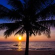 Sunset in tropics — Stock Photo #46463271