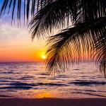 Sunset in tropics — Stock Photo