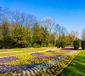 Garden flowers.  garden background  — Stock Photo