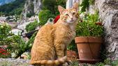Cat portrait .  — Stock Photo