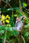 Little Monkey — Stock Photo
