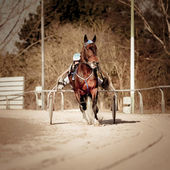 Harness Racing horse — Stock Photo