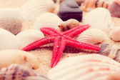Shell and starfish on beach — Foto de Stock