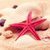 Shell and starfish — Stock Photo