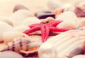 Shell and starfish on beach-11 — Stock Photo