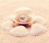 Powłoki na plaży — Zdjęcie stockowe