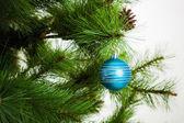 圣诞节树分支与球 — 图库照片