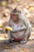 Money eating banana — Zdjęcie stockowe