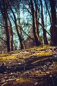 Wild forest  — Stock Photo