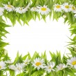 Daisies meadow frame concept — Stock Photo