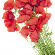 Wild field poppies bouquet — Stock Photo #12785640