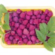 Real summer raspberries — Foto Stock