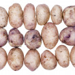 Potatoes with skins on the conveyor — Stock Photo